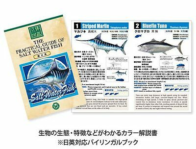 REAL FIGURE BOX FISHWATER FISH COLORATA /& THE PRACTICAL GUIDE OF FISHWATER FISH
