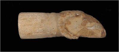 A Roman black stone animal head 2
