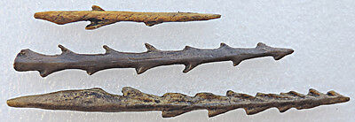 Set of 3 toothed harpoons - casts of resin 3