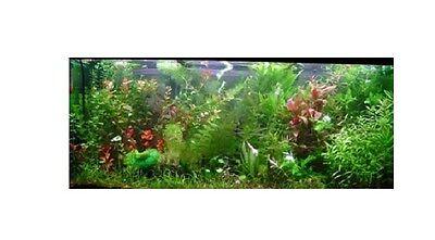 promo lot 250 plantes aquarium 16 varietes a racines et tiges +6 cladophora en+ 3