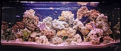 40 Kg Mixed Set Of Stones For Malawi Cichlid Tanganyika Aquarium Ocean Rock 8