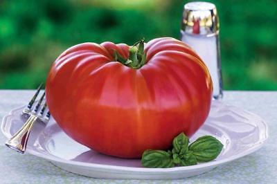 Tomato - Gigantomo F1 - 12 Finest Seeds -  Worlds Largest Beefsteak