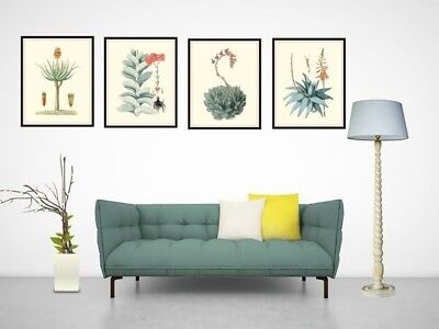 """Set of 4 Vintage Botanical Art Print Poster Reproductions """"Cactus and Succulents 3"""