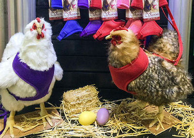 Walk Your Chicken Harness (Take 'em for a Walk), Leash SOLD Separately 2