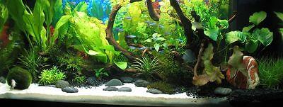 25 Kg White Aquarium Silica Sand 100% Natural, High Quality + Free Pebbles 3