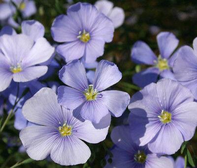 All Perennial Wildflower Mix Seeds    ST6