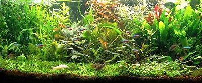 PROMO lot 100 plantes aquarium 13 variétés a racines et tiges +3 clado gratuites 2
