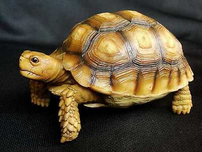 Geochelone elegans Indian star tortoise model replica ornament sculpture turtle