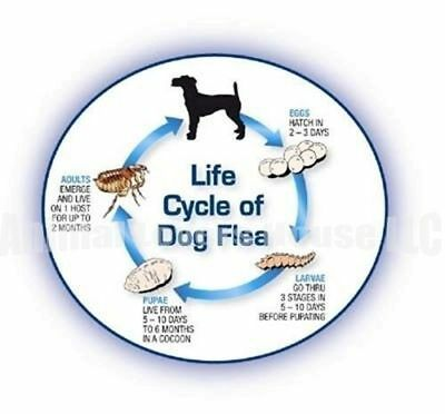 12 Monthly Capsules Flea Control 410mg Dogs 46-90 lbs FAST FREE SHIPPING 2