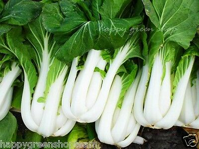 CABBAGE CHINESE PAK CHOI - 1700 SEEDS White  Brassica chinensis vegetable fruit 2