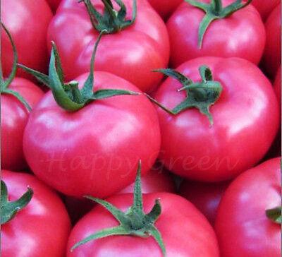 Large Pink Tomato - 300 Seeds - Pink Super King