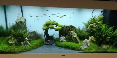 Natural Wood Stone For An Aquarium Aquascaping Iwagumi Style, Nature, Malawi 9