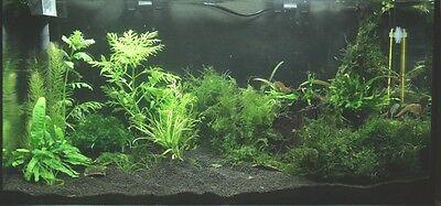15 KG NATURAL BLACK AQUARIUM SUBSTRATE  ( SAND 1 - 1,6 mm ) IDEAL FOR PLANTS 2