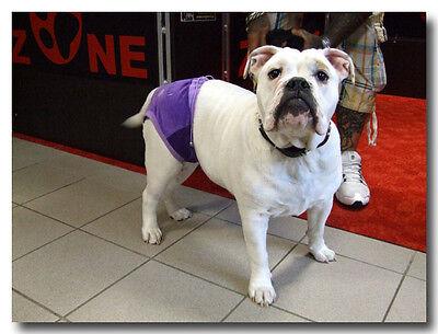 * Schutzhöschen * Hundehöschen * Läufigkeitshöschen für Hunde *CRAZY DOGSZONE 7