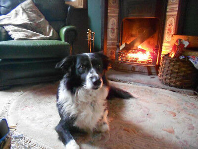 5th April 2019 2 nights dogfriendly cottage Forest of Dean 3