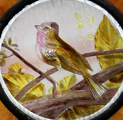 Painted Song Bird English Antique Stained Glass Window Rare
