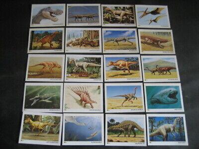 77 Dinotarjetas. Dinosaurios, Fosiles, Paleontologia 4