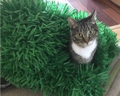 Tissue Paper Grass Mat for cat or kitten toy UK FAST DELIVERY pet toys. 4