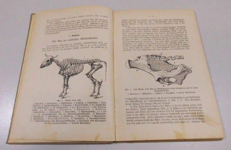 C. Nörner Geburtshilfe u. Geburtspflege praktischer Ratgeber Viehbesitzer 1921 3