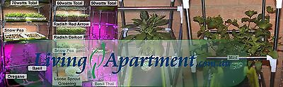 Amaranth Sprout seeds 20g, 100g, 400g