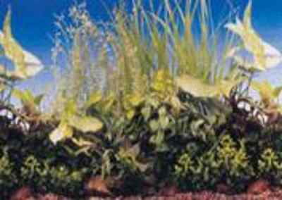 poster fond d aquarium decors plantes double faces  80x 50 cm de hauteur 5