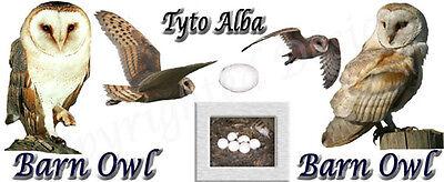 White Barn Owl Girls//Ladies Denim Purse Wallet Christmas Gift Idea AB-O20JW