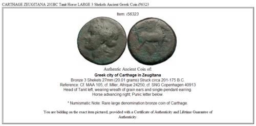CARTHAGE ZEUGITANA 201BC Tanit Horse LARGE 3 Shekels Ancient Greek Coin i56323 3