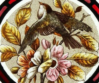 Rare Painted Bird Swallow In Blossom Antique English Stained Glass Window