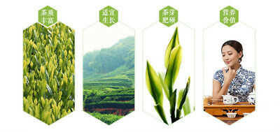 Bestnote schwarzer Oolong-Tee-natürlicher Tee Tieguanyin 50g schwarzer Tee Tea 7