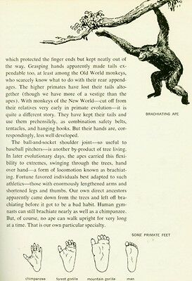 Human Beginnings Evolution Anthropology Paleontology Neolithic Paleolithic RARE 5