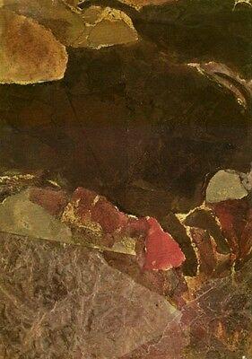 Human Beginnings Evolution Anthropology Paleontology Neolithic Paleolithic RARE 2