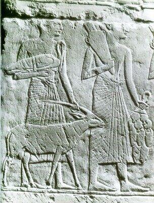 Ancient Egypt Animals Gods Pets Livestock Wild Fish Birds Insects Serpents PIX 4