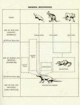 Human Beginnings Evolution Anthropology Paleontology Neolithic Paleolithic RARE 6