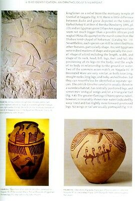 Birds in Ancient Egypt As Mummies, Deities, for Food Art Amulets 40 Artifacts