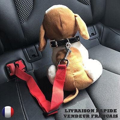 Ceinture de sécurité pour voiture pour chien ou chat NEUVE 3