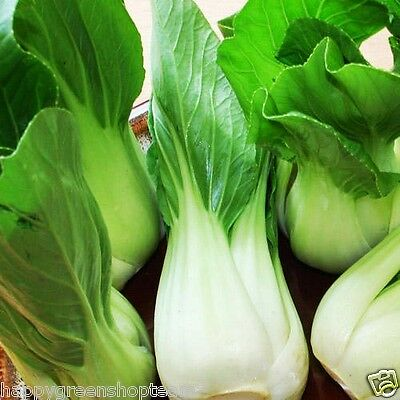 CABBAGE CHINESE PAK CHOI - 1700 SEEDS White  Brassica chinensis vegetable fruit 3
