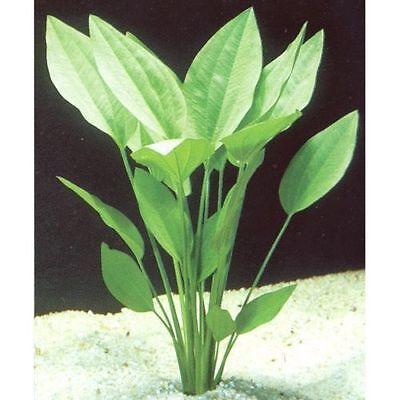 lot 20+2 plantes a racines aquarium anubia cryptocoryne echinodorus vallisneria 4 • EUR 49,99