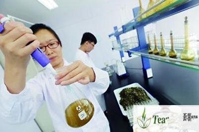 Good Lapsang Souchong tea Superior Black Tea Organic Zhengshanxiaozhong Lose tea 10