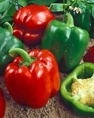 Vegetable  Sweet Pepper Yolo Wonder  220 Seeds