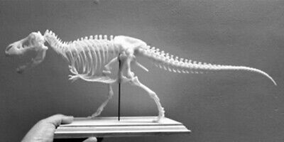 1/20 Tyrannosaurus Rex Trix Skeleton Model T-Rex Dinosaur Collector Toy 3D Print 6