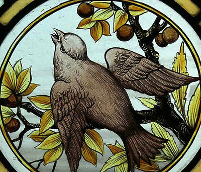 Rare Painted Bird Adorned With Rondels English Antique Stained Glass Window 2