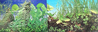 poster fond d aquarium decors plantes double faces  80x 50 cm de hauteur 3