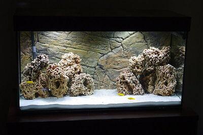 15 Kg  Natural Light Limestone Ocean Rock For Malawi Cichlid Aquarium Fish Tank 4