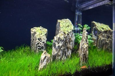 Natural Wood Stone For An Aquarium Aquascaping Iwagumi Style, Nature, Malawi 7