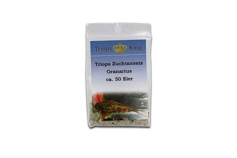 Triops Granarius Urzeitkrebse Zuchtansatz Eier-Sand-Gemisch mit Triopseier 2