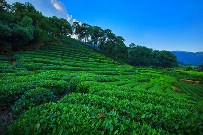 100g Mûr Pu-erh Thé Tuocha Premium Yunnan Thé Pu-erh Vieux Thé Arbre Matériaux 茶 8