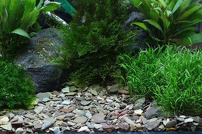 Dennerle Plantahunter Natural Aquascaping Gravel Rio Xingu MIX 2-22mm NEW 5kg 2