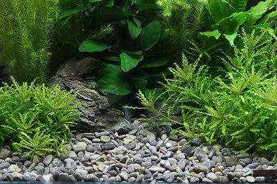 Dennerle Plantahunter Natural Aquascaping Gravel River L 8-12mm NEW 5kg 2