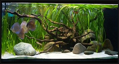20 Kg Natural White Aquarium Silica Sand Types Of Aquariums 4