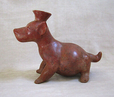 LARGE Pre-Columbian COLIMA TERRACOTTA SEATED DOG VESSEL, circa 300 B.C. 2